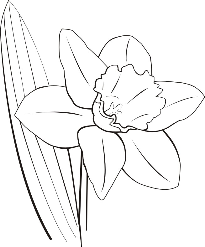 Daffodil Clip Art Black And White Flowers the sign expert .com