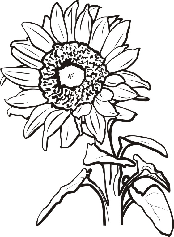 Flowers | The Sign Expert .com